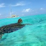 Klein Curacao turtle Studentenhuis